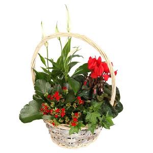 bouquets de noël: panière de plantes de noël