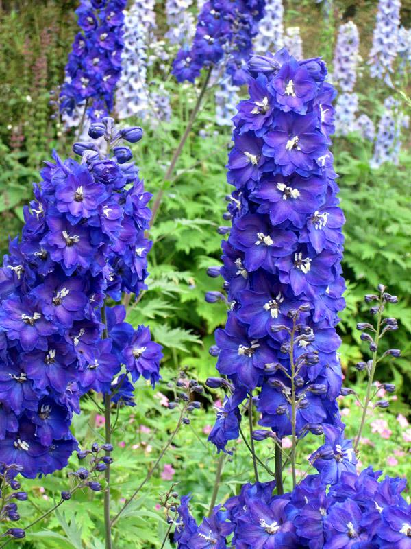 Fleurs d 39 t les types de fleurs et leurs emplois en - Fleurs d ete plein soleil ...