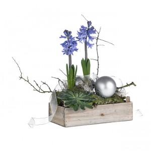 fleurs et plantes de noël: jacinthes bleues