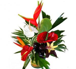 fleurs et plantes de noël: composition de fleurs exotiques Tolède