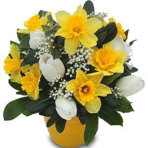 fleurs de printemps: composition de tulipes blanches et narcisses jaunes
