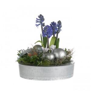 bouquets de noël: jacinthes bleues