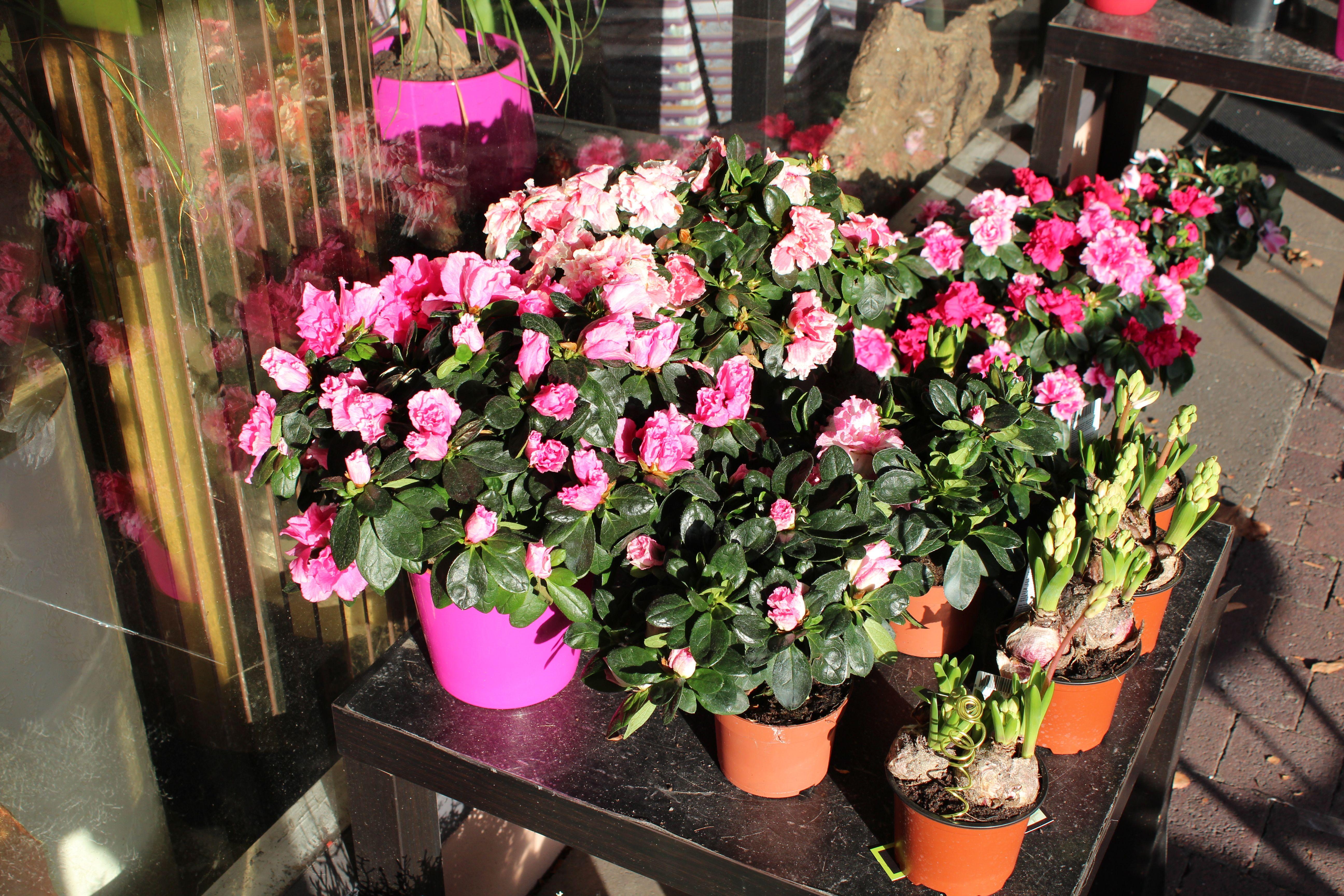 les fleurs d octobre couleurs vari 233 t 233 s et d 233 cors le fleursinfo