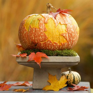 citrouille d'automne