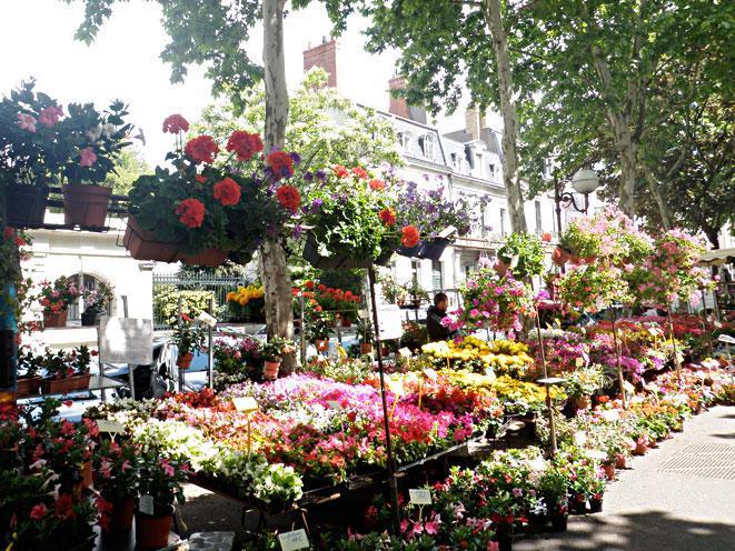 Un bonjour du Canada Marche-des-fleurs-paris-ile-de-la-cite