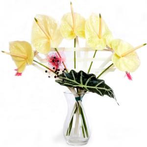 fleur de Noël: bouquet de Noël d' anthuriums