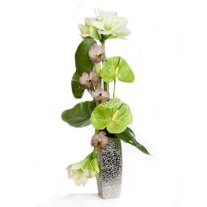 fleur de Noël: composition de fleurs de Noël d' orchidées anthuriums et amaryllis