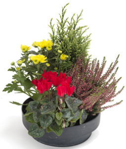 coupe de plantes fleuries rouge jaune