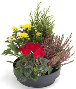 fleurs deuil plantes fleuries pour le cimeti rele blog fleursinfo. Black Bedroom Furniture Sets. Home Design Ideas