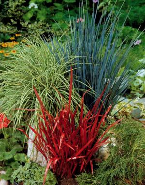 fleurs deuil plantes et arbustes rustiques pour jardins d. Black Bedroom Furniture Sets. Home Design Ideas