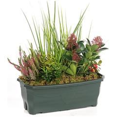 Fleurs deuil plantes et arbustes rustiques pour jardins d for Plante exterieur hiver ete