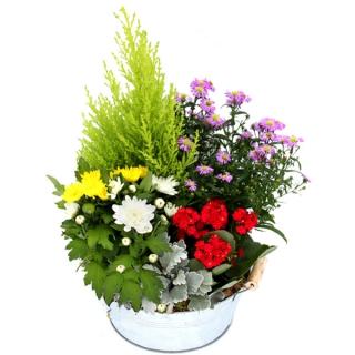 Fleurs deuil livraison de coupe de plantes pour cimeti re for Livraison plantes exterieur