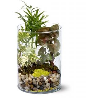 composition de plantes vertes: Cylindre Japonais