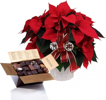 Poinsettia et Chocolats