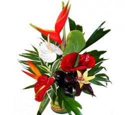 fleurs exotiques livraison fleurs exotiques floraclic. Black Bedroom Furniture Sets. Home Design Ideas