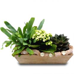 Livraison Fleurs Jardiniere De Plantes De Noel Jardin D Hiver