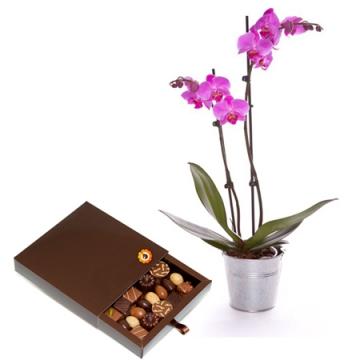Livraison fleurs et chocolat orchid e et boite de for Livraison de fleurs demain