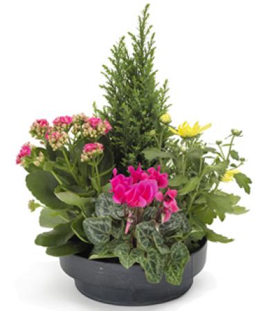lvraison fleurs deuil coupe de plantes ext rieur rose jaune floraclic. Black Bedroom Furniture Sets. Home Design Ideas