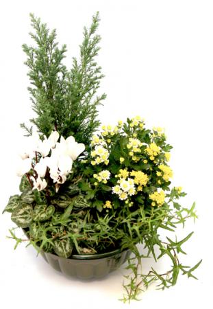 livraison fleurs deuil coupe de plantes ext rieur jaune blanc. Black Bedroom Furniture Sets. Home Design Ideas