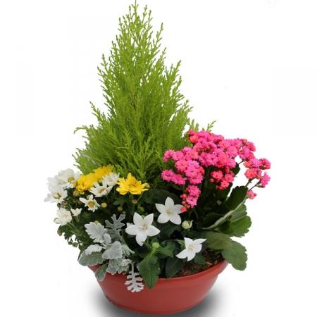 Fleurs deuil livraison de la coupe de plantes ext rieur for Livraison plantes exterieur