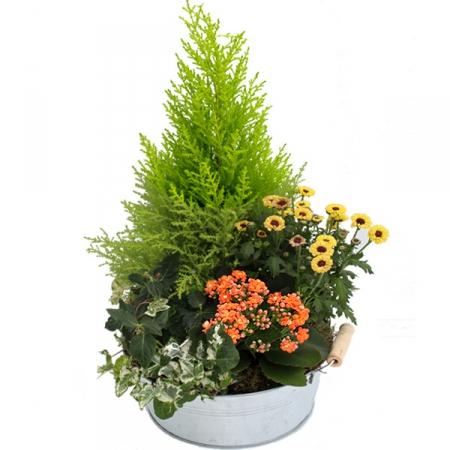 fleurs deuil livraison de la coupe de plantes jaune orang e par floraclic. Black Bedroom Furniture Sets. Home Design Ideas