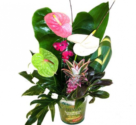 Fleurs exotiques livraison composition d 39 anthuriums salsa for Livraison fleurs exotiques