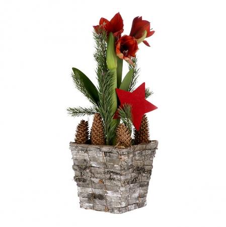 Livraison fleurs amaryllis rouge en pot for Plante de noel