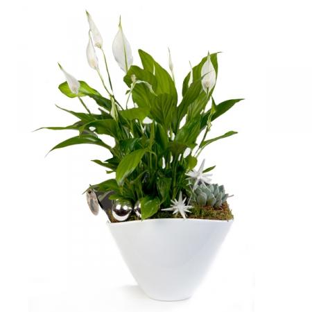 Fleurs de no l livraison de la composition de plantes for Plante de noel