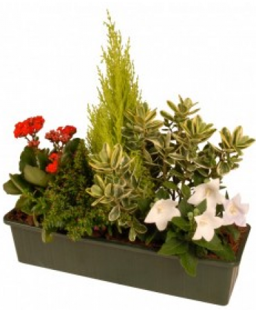 Livraison fleurs deuil jardini re de plantes pour for Plante exterieur hiver ete