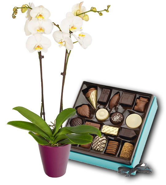 livraison fleurs et chocolat: orchidée et boite de chocolats