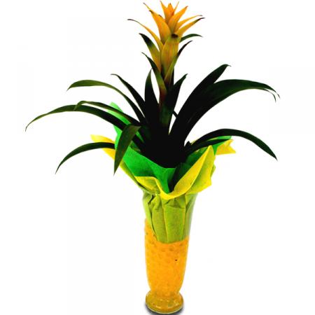 Livraison fleurs plante fleurie guzmania floraclic for Plante jaune
