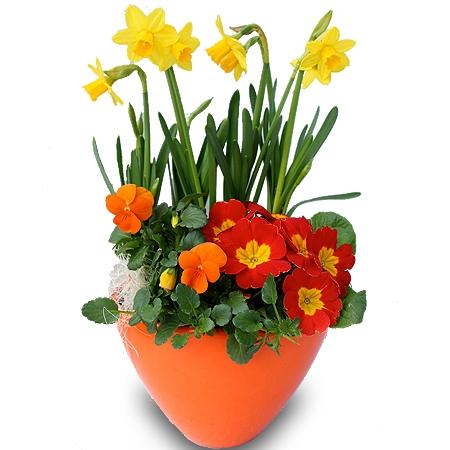 livraison fleurs coupe de plantes floraison fleurs f te des grnad m res. Black Bedroom Furniture Sets. Home Design Ideas